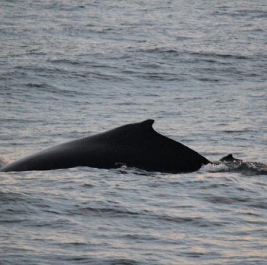 Large Whale Costa Rica Canon Andrea Fellman
