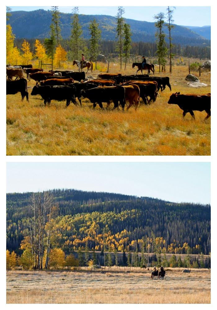 Colorado in Fall | Vista Verde Ranch