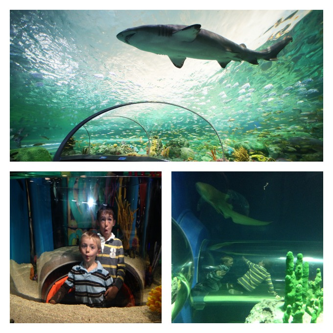 The Ripley's Aquarium of Canada