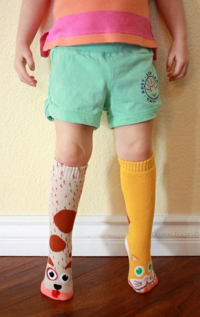 vs socks cat and dog