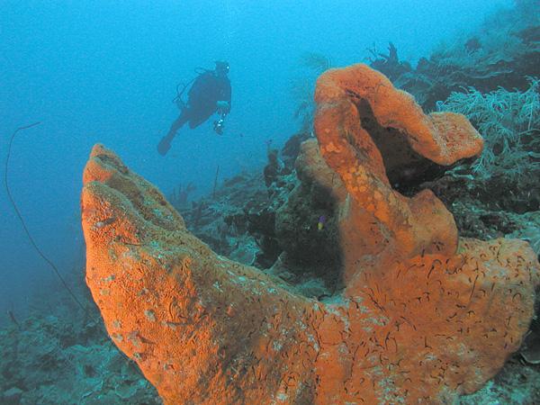 Spring Break: St. Croix US Virgin Islands