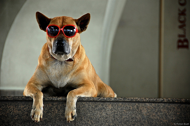 dog friendly summer travel