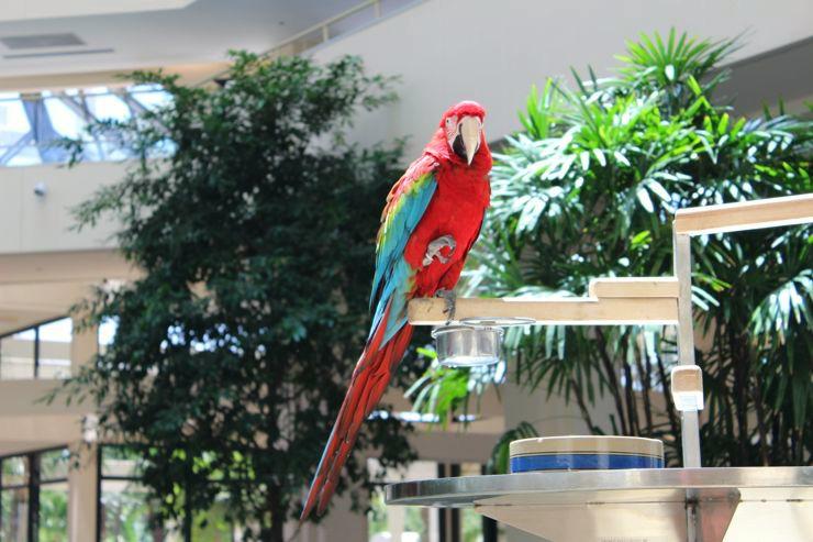 hotels near disney world, Hyatt Regency Grand Cypress Orlando