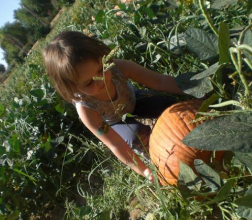 Mckenna Pumpkin Patch SSM