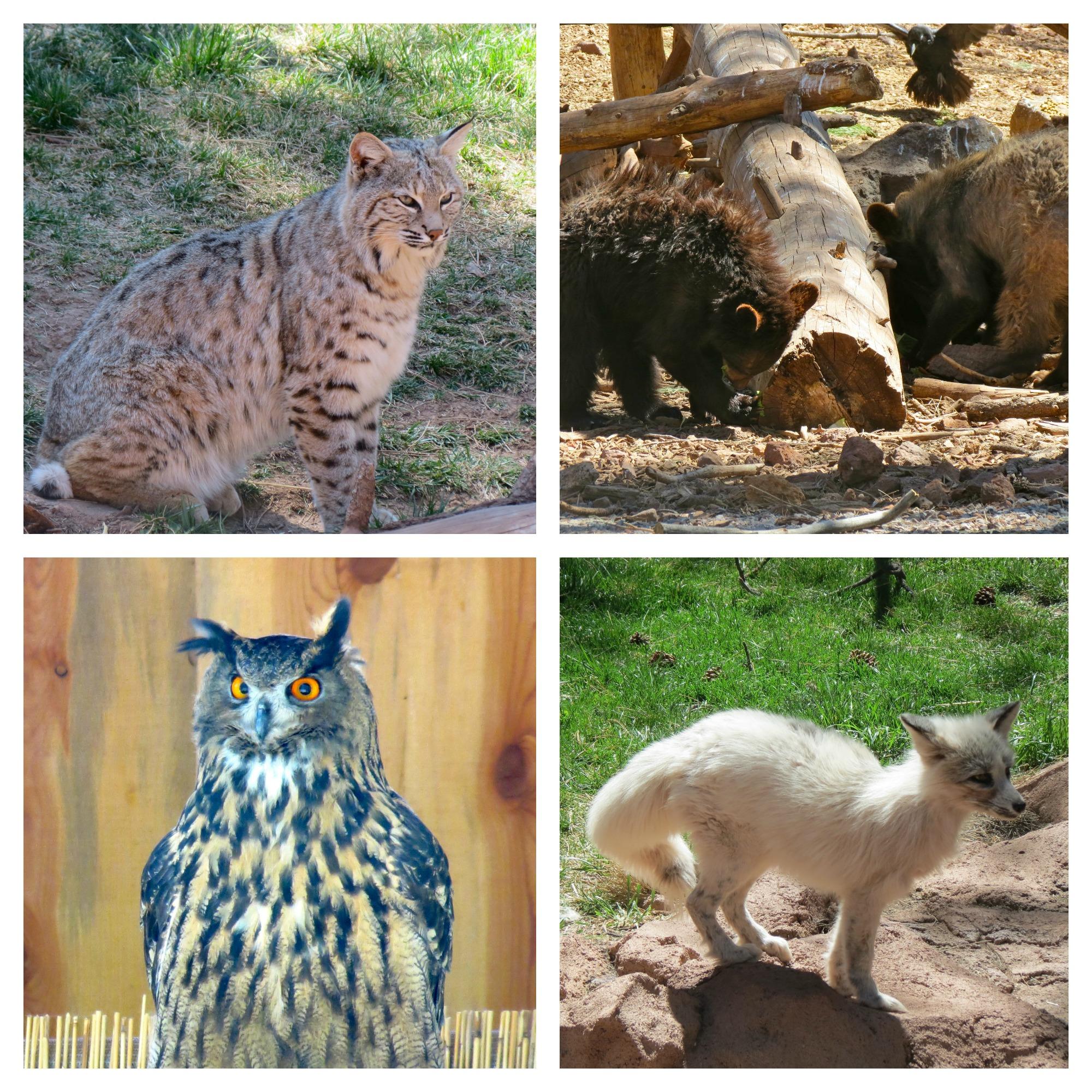 Bearizona Wildlife Park in Arizona