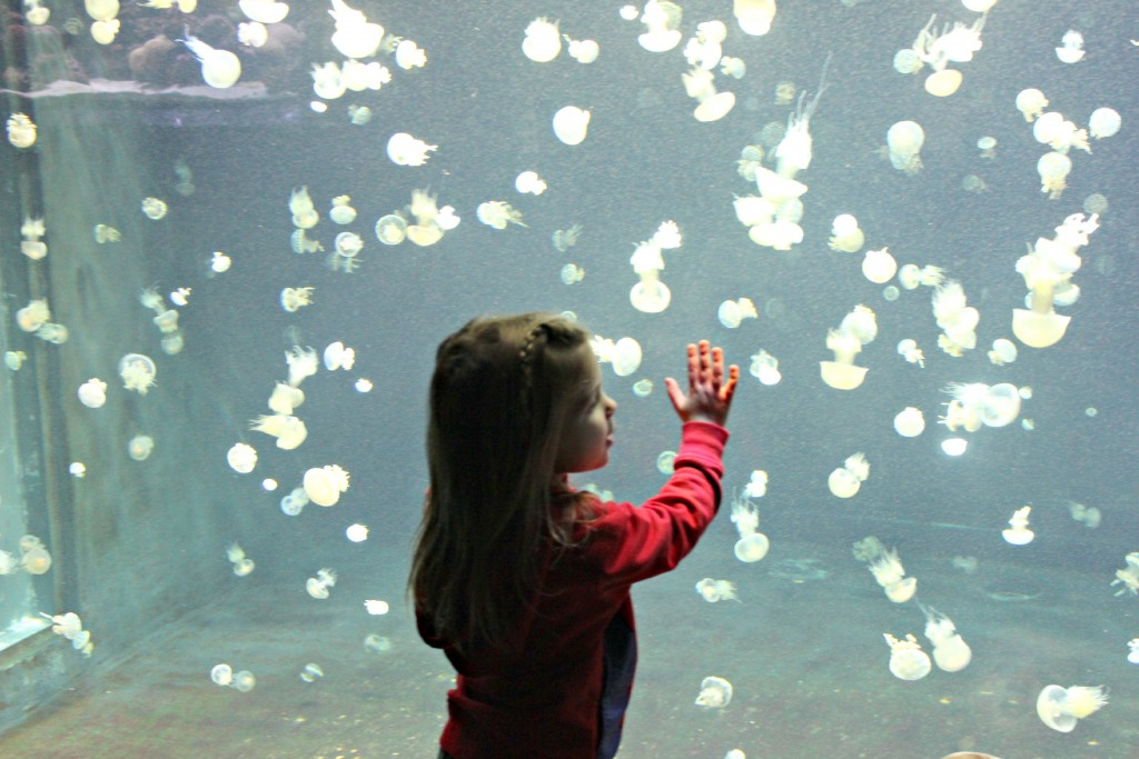Visiting Vancouver with Kids: Don't miss the aquarium!