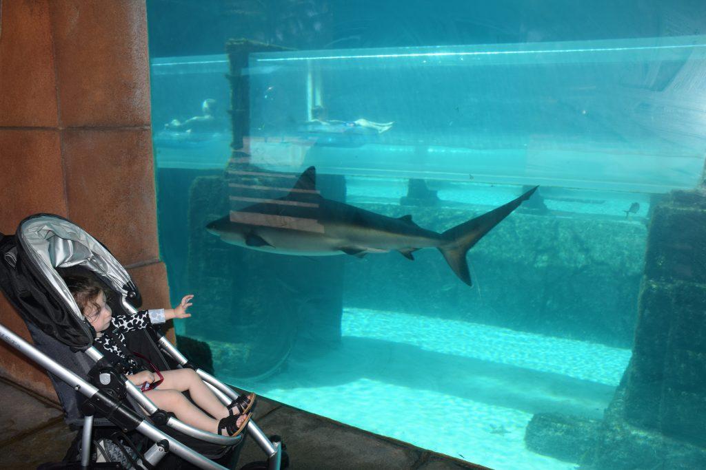 Activities for Kids at Atlantis Bahamas
