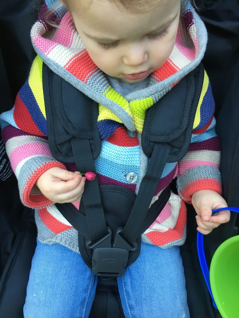Win an OXO Tot Cubby+ Stroller on Savvy Sassy Moms