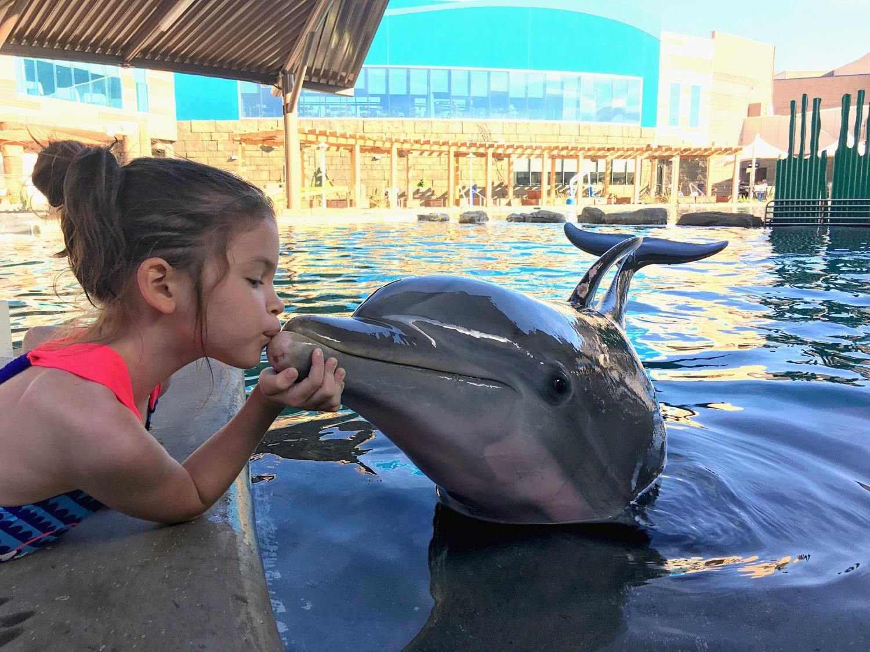 dolphinarius-feature
